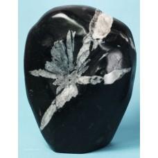 Chrysanthemum Stone