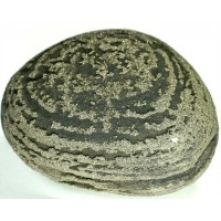 Pyrite Concretion